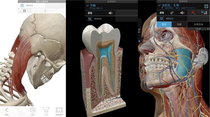 2019版人体解剖学图,神级医疗学习软件